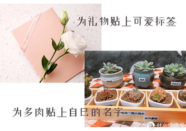 收纳整理植物贺卡丝带标签