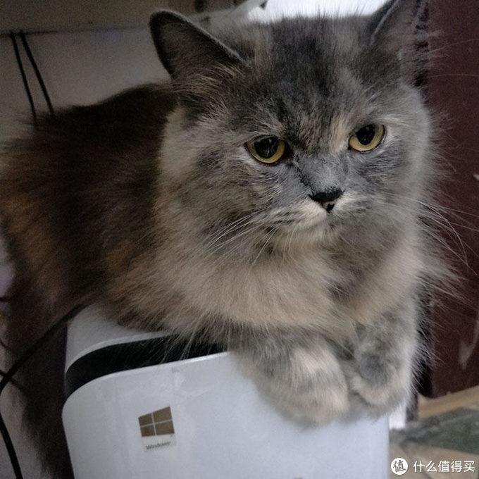 买猫粮的第一步,学会看猫粮成分表!