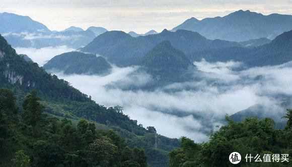▲忙麓山常年云雾缭绕,土壤有机质丰富