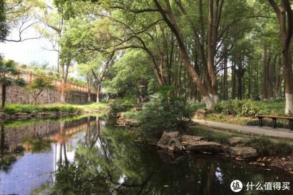 景区内有着各种各样的池塘,临近过年的时候景区还会组织集体捕鱼,作为福利发给职工