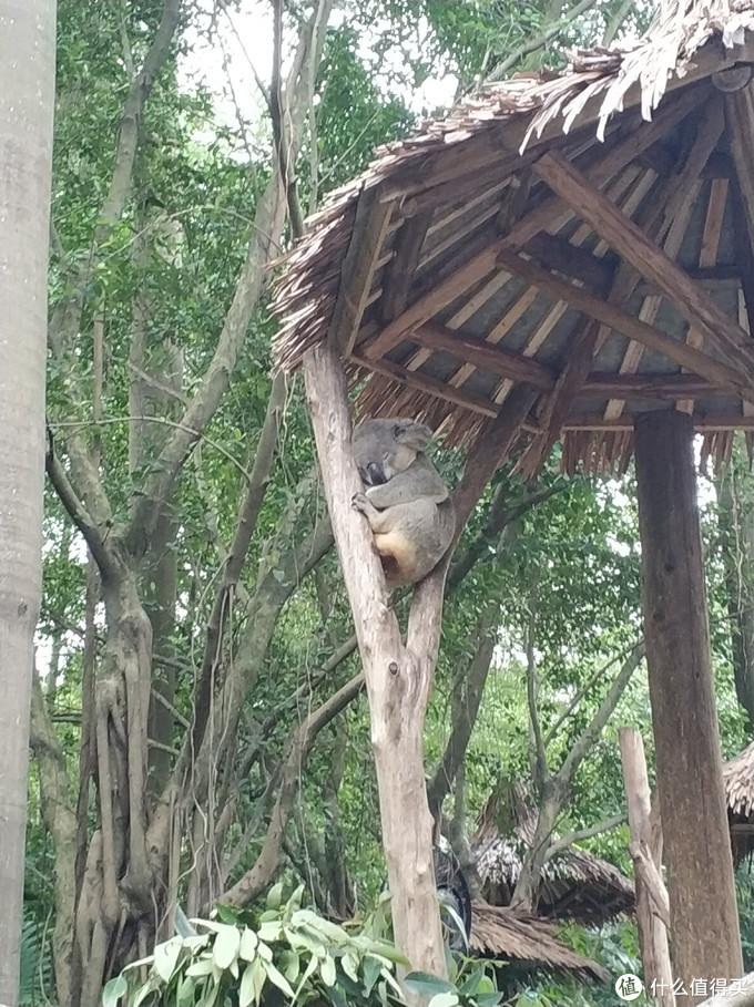 一篇玩转广州长隆野生动物世界、长隆大马戏(游玩攻略+省钱技巧)