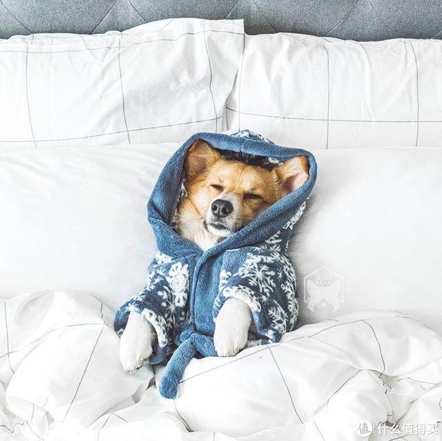 """为了网购一款羽绒枕,我竟然弄到了这么多""""行业机密""""?家居小白必入!"""