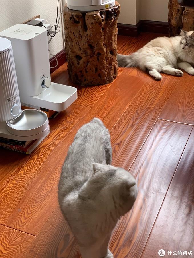 尾巴生活furrytail feeder宠物智能喂食器&对比小佩的开箱