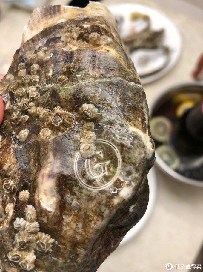 蚝壳的G刻印