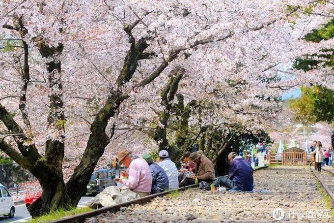 每年4月的樱花季是日本最美的季节