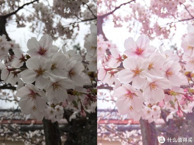 原图是同事去日本拍的樱花