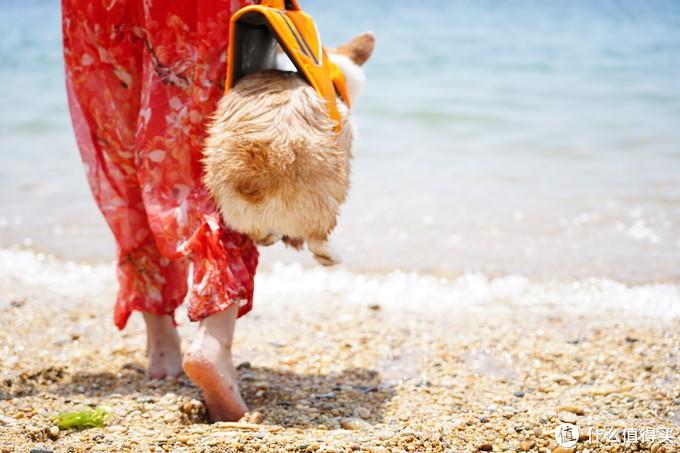 带着OSMO Action和狗去海边下水 大疆运动相机不完全测试