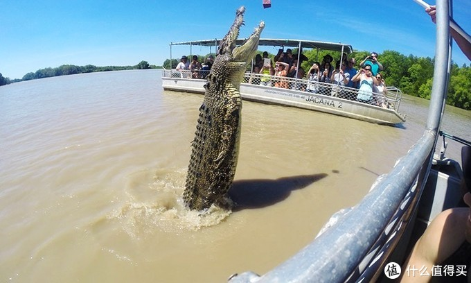 在澳大利亚北部,和鳄鱼也可以玩的这么high