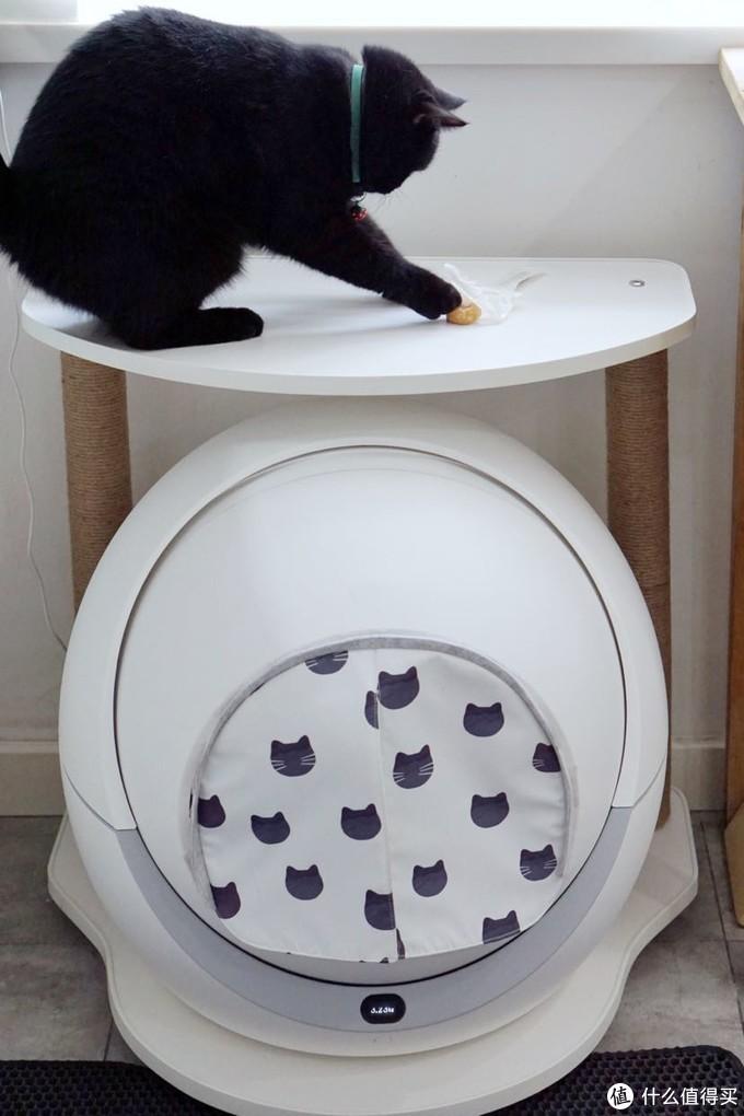 猫爬架的平台不高不低,正好可以让猫咪跳上去玩。