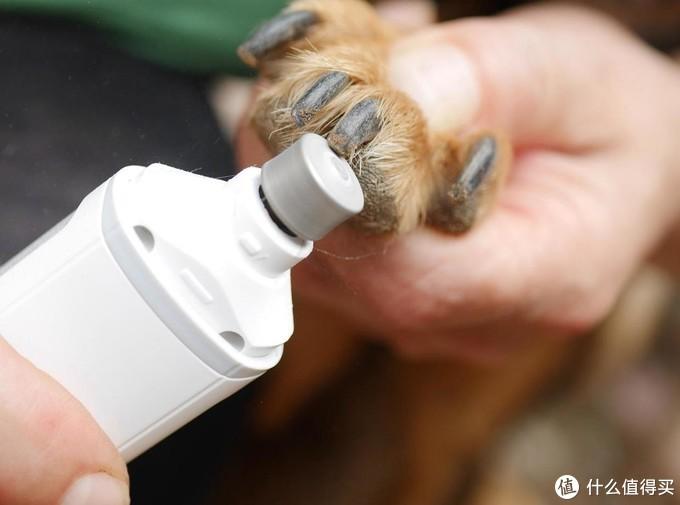 不用剪刀,用磨爪器让狗狗的指甲干干净净整整齐齐
