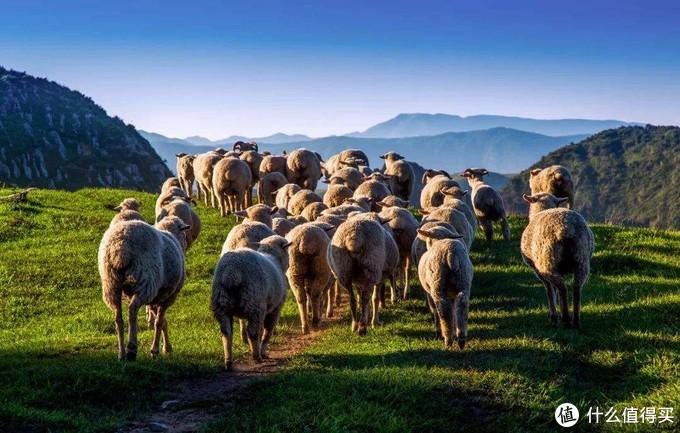 暑假去贵州,在东风湖游船,在阿西里西大草原看牛羊成群