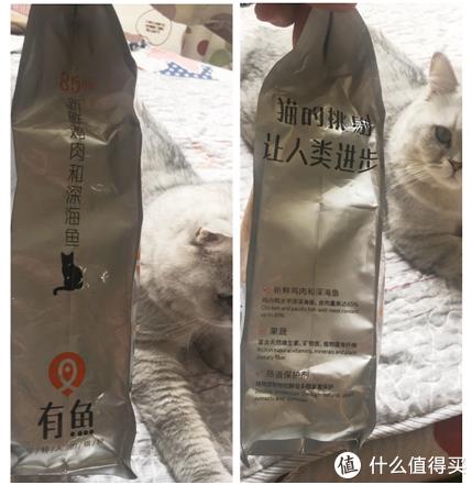 除了有鱼猫粮匿白联名款,还有多少种选择给我的猫咪?