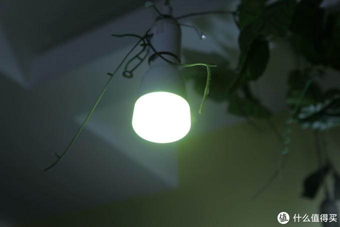 除了小爱同学,现在siri居然也能帮我开关灯了!-Yeelight彩光版LED灯带及智能彩光灯泡晒单