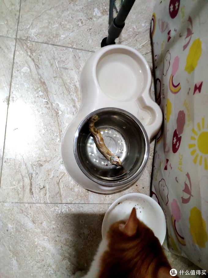 冻干食品有点贵,佩妮6+1 宠物冻干测评