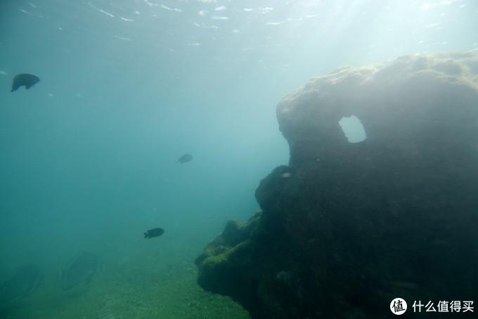 这里有一个模拟的海底世界,可以看到几只海龟游过。