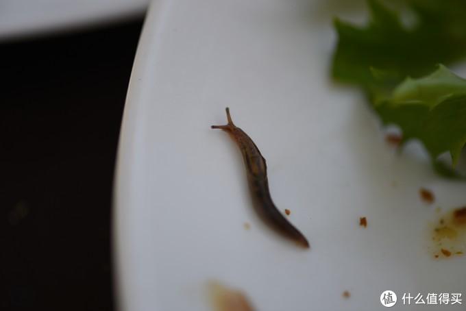 相当的原生态,在这边我吃出来好几次虫子了,增加蛋白质。