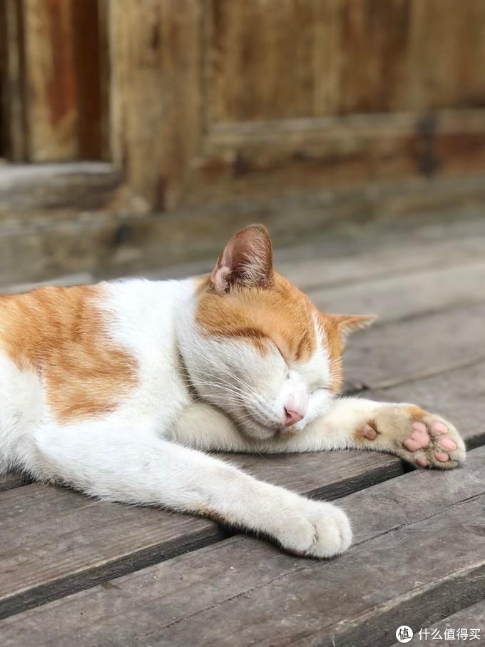 午睡的猫咪