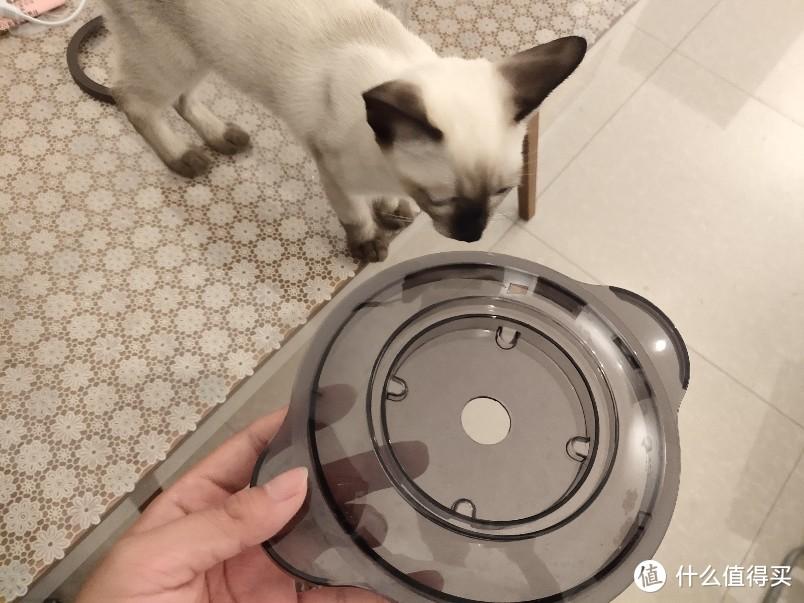 让猫饭更快一步-小熊绞肉机
