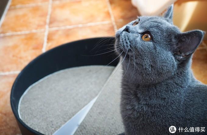 八年铲屎官聊聊养猫:如何最大限度实现人猫共存