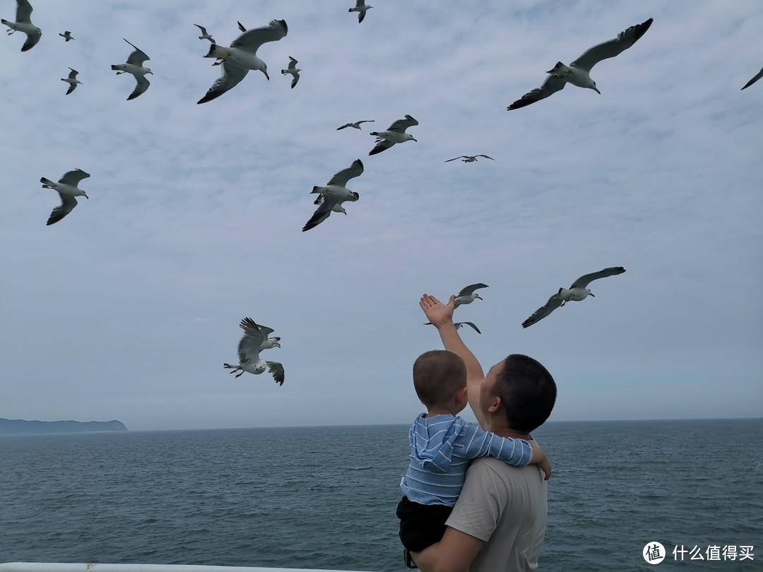 海鸥很聪明,刚起航的时候跟着船飞,知道喂得人很多,到了中后程,海鸥们就去找另外一艘船了,因为这艘船上大家的热情都耗光了,也没人喂了。