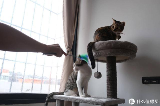 """猫主子的""""城堡"""":有品上线的小兽星猫爬架,深得猫奴的喜欢"""
