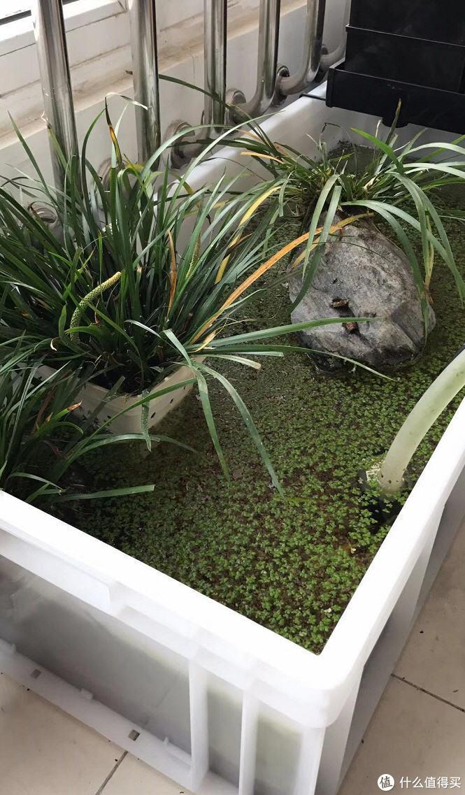 守住那一小片野趣:手把手教你打造楼房也能玩转的原生态龟池