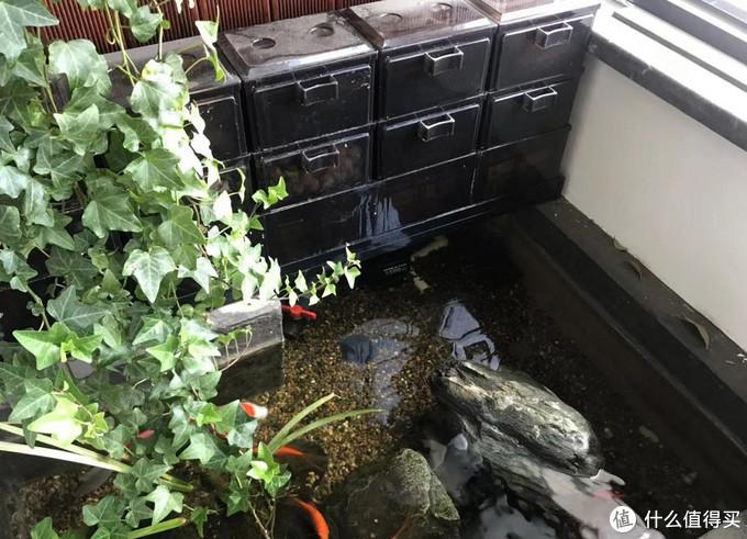 过滤直接架在龟池上就好了,滤材没有全部放满,以防出现喂不饱硝化细菌的问题