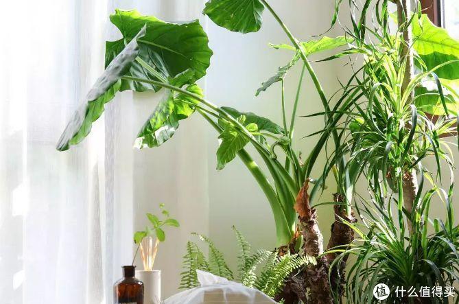 """""""植物杀手""""的我,靠这10种植物…成了养""""植""""专家"""""""