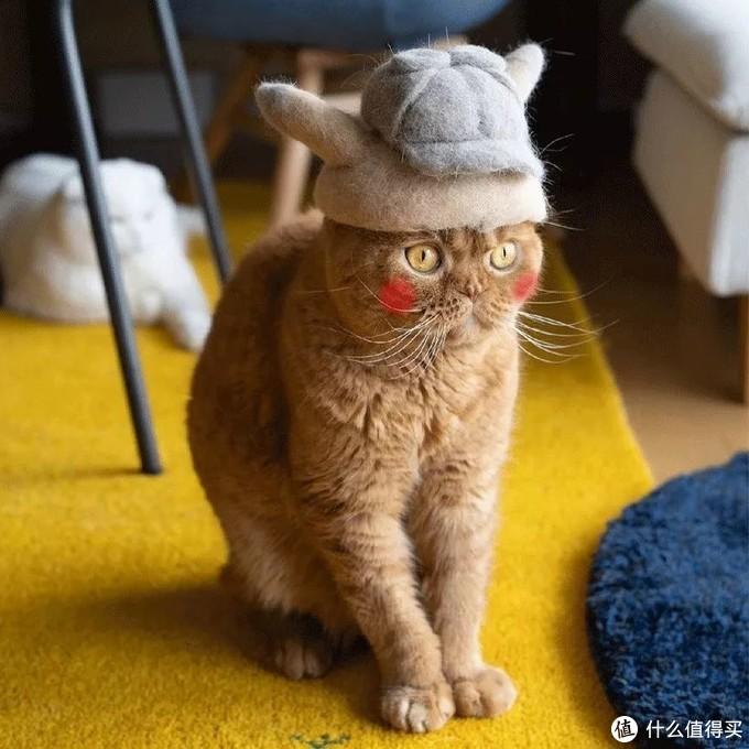 猫掉毛可以让人崩溃到什么地步?