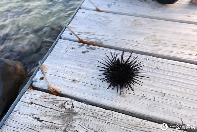 海里很多海胆,要小心别被扎脚