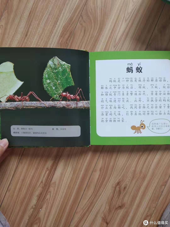 99元选5件的那些值得买的书1--小小知识通:动物海洋恐龙甲虫昆虫