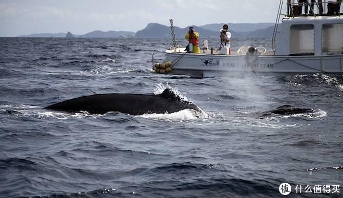 冬季日本冲绳的小众玩法,带着女朋友乘船去寻找座头鲸