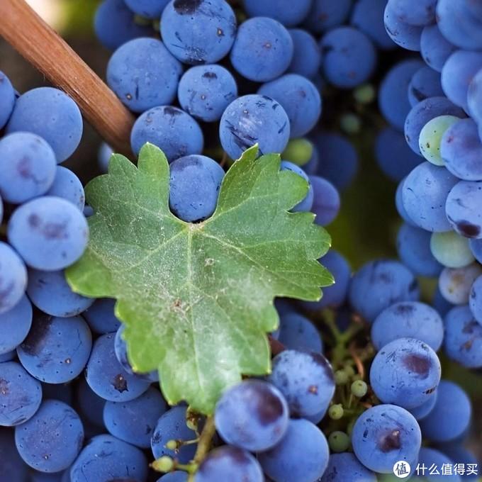 品尝红酒的初级入门,小选3款网上好价好喝的红酒横评。