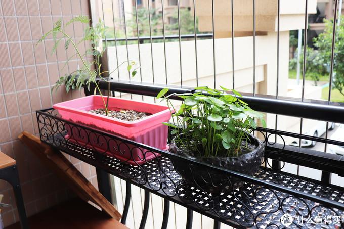 简单实用的阳台维护分享!含清洁、收纳、美化经验