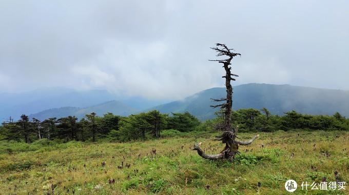 东梁顶一颗枯萎的树