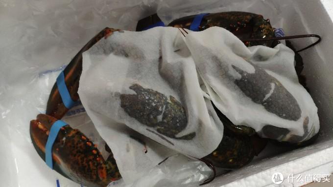 第一次吃波士顿大龙虾,除了爽,我不想说别的!