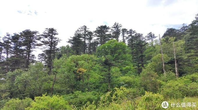 同一地点夏天与冬天松树对比,哪个更漂亮?