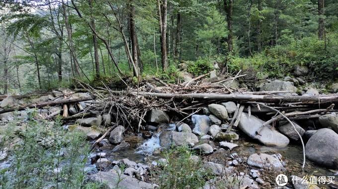 被山中洪水冲的枯枝烂木,都集中在一起。