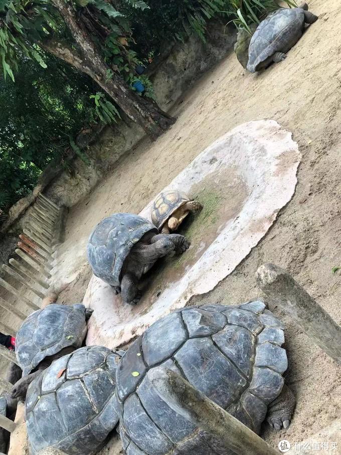 陆龟是可以进入喂食、合影照相的