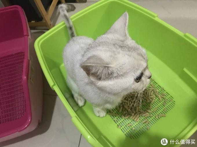 拥有3只猫的男人:松木猫砂实用经验分享