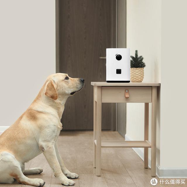 出门担心宠物无人照顾?awbby智能宠物零食机,不在家也能照顾它