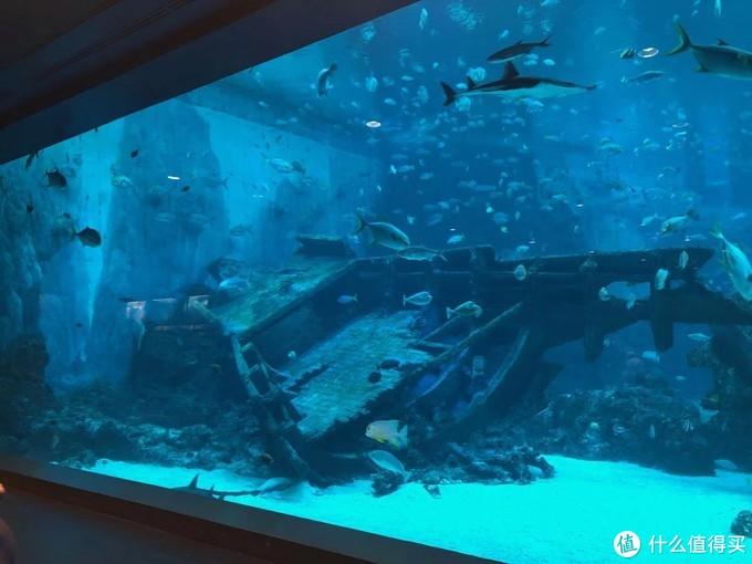 沉船区,各种海鱼