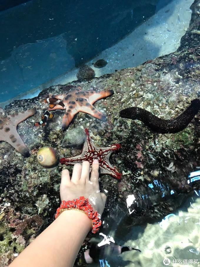 触摸区域,有海星和海参
