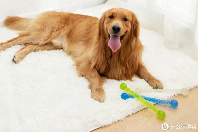为了买狗狗的玩具你交了多少智商税?(宠物玩具大测评 多图)