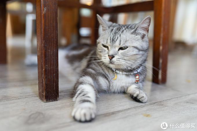 看海,撸猫,发呆,青岛文艺范咖啡馆之推荐