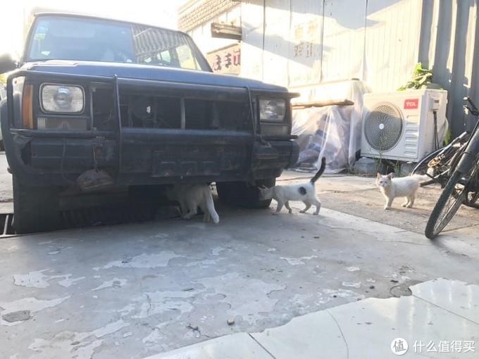 2017.9 狮子妈 狮子姐妹 狮子(其实车底有一坨黑色长毛怀疑是狮子亲爸)
