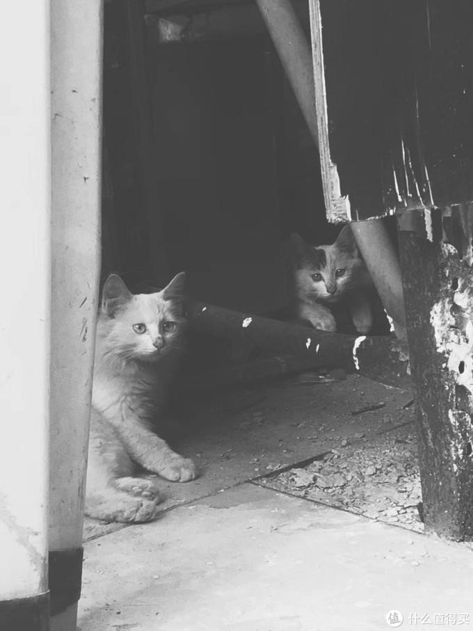 2017.9 狮子和他的姐妹