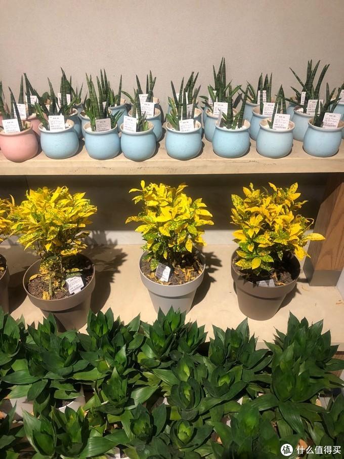 鹿岛普通生活:杭州性价比超高的鲜花、盆栽店游记
