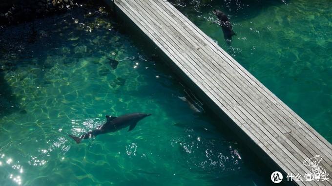 海洋世界之海豚