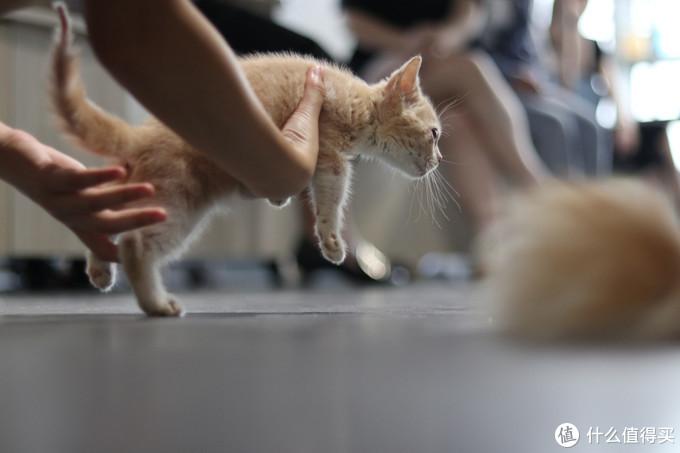 没条件养猫怎么办?去猫咖,撸猫吸猫不要停!